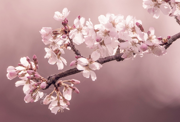 blossoms-5